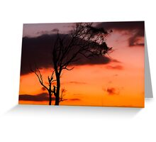 Tree silhouette in Queensland Greeting Card