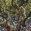 Up in the Tree by Darlene Virgin