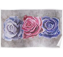 Purple and Red Watercolor Roses  Poster