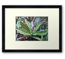 Red & Green Crotons Framed Print