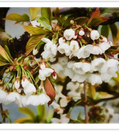 Flower Art - Apple Blossoms Sticker
