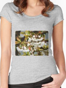 Flower Art - Apple Blossoms Women's Fitted Scoop T-Shirt