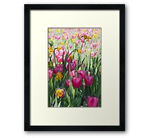 Tulips in a Spring Flower Garden Framed Print
