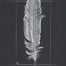 Swan Feather - Still Life by Troglodyte