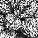 Veins by David Schroeder
