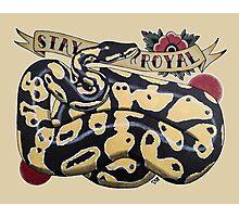 """""""Stay Royal Ball Python"""" Photographic Print"""