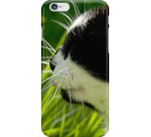 The Cats Whiskers iPhone Case/Skin