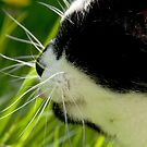 The Cats Whiskers by bertie01
