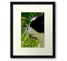 The Cats Whiskers Framed Print