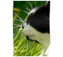 The Cats Whiskers Poster