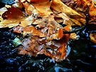 Autumn Leaves  by Deborah McGrath