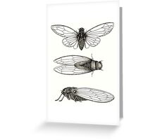 3 sepia Cicadas Greeting Card