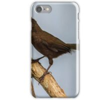 Baby Whipbird at iso 1600 iPhone Case/Skin