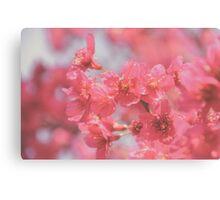 Plum Blossom 4 Canvas Print