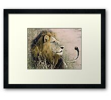 Mapogo male lion(This is my best side!) Framed Print