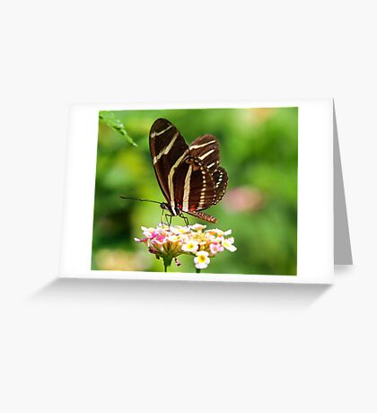 Zebra Longwing in profile Greeting Card