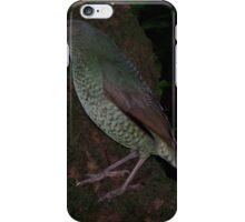 Ptilonorhynchus violaceus (Satin Bower Bird) iPhone Case/Skin