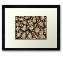 Do tortoises make noises? - Yampoem Framed Print