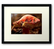 Fairies Armchair Framed Print