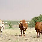 Afrikaner Ox by Madcowontherun