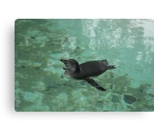 Enjoying the Water Canvas Print