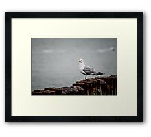 Seagull at harbor - seaside coastal beach - bathroom bedroom living room decor Framed Print