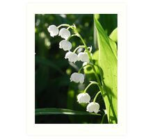 Lily-Of-The-Valley Art Print