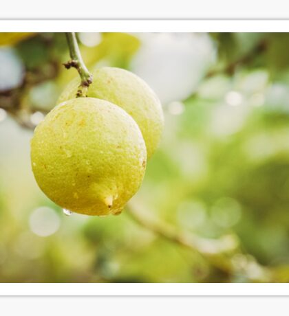 Lemon tree Sticker