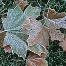 Frosty Leaves by Monnie Ryan