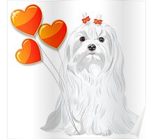 Valentine card with a dog Maltese Poster