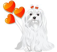 Valentine card with a dog Maltese Photographic Print