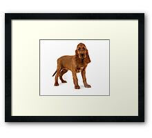Irish Setter puppy Framed Print