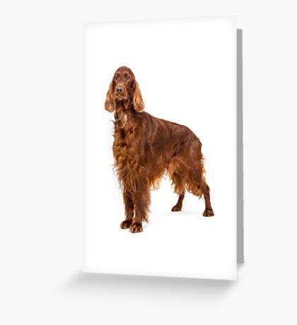Portrait of Irish Setter Greeting Card