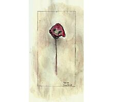 Papaver Photographic Print