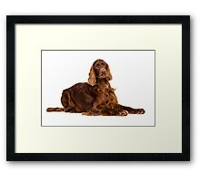 Portrait of Irish Setter Framed Print