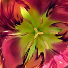 Parrot Tulip by © Loree McComb