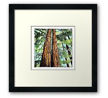 Redwoods for Emma, drawing and watercolor Framed Print