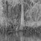 Lettuce Lake State Park--Winter by Imagery