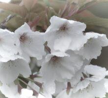 Blossom Time............ Sticker