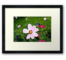Kissed By Cosmos Framed Print