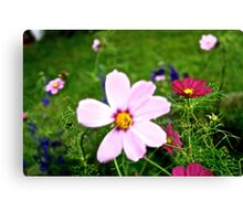 Kissed By Cosmos Canvas Print
