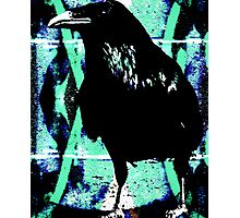 Raven waiting Photographic Print