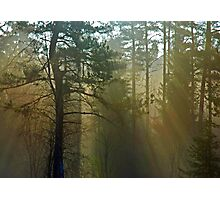 Fairytail Photographic Print
