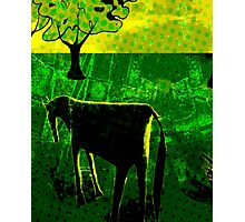 Just another green horse Photographic Print