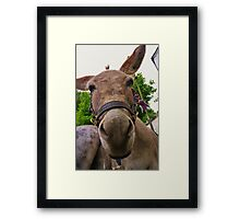 DONKEY - MAKE AN ASS OF YOURSELF Framed Print