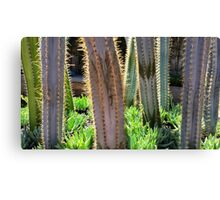 Glowing Cactus Canvas Print