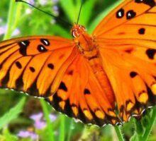 Orange Butterfly Windows From Heaven Sticker