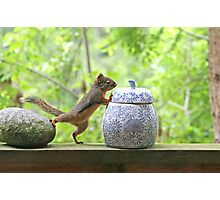 Squirrel and Cookie Jar Photographic Print