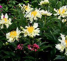 Green Lotus Peony by Sheri Ann Richerson