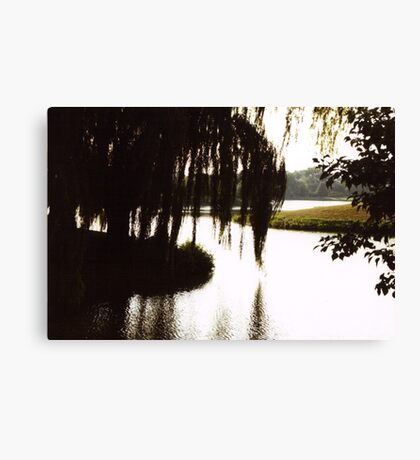 Willow Silouette Canvas Print